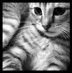 Kitten by Natbun