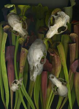 Tubes and  Bones