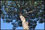 Tree 2 by AlexDeeJay