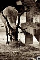 schonnbrun zoo 20 by AlexDeeJay