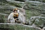 schonnbrun zoo 21