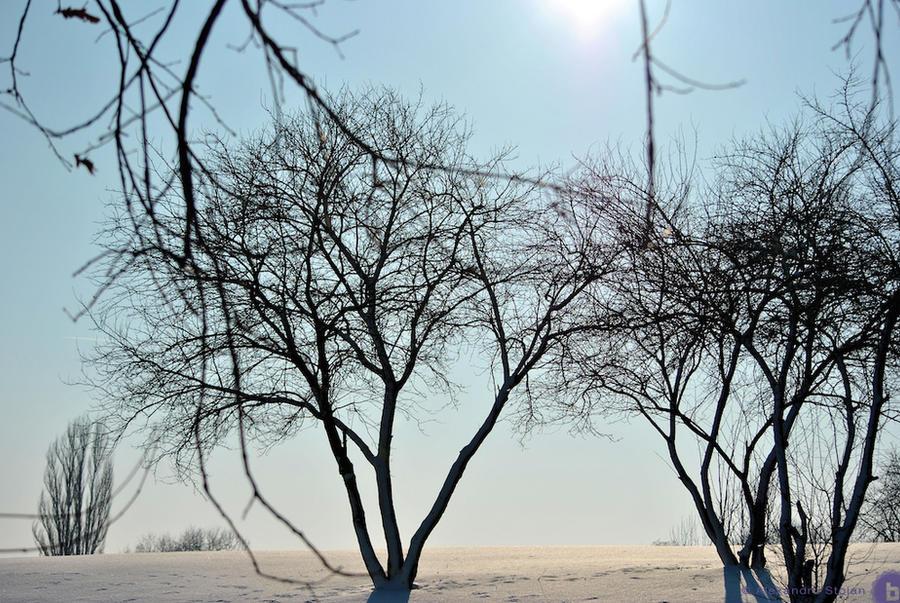 Snow 02 by AlexDeeJay