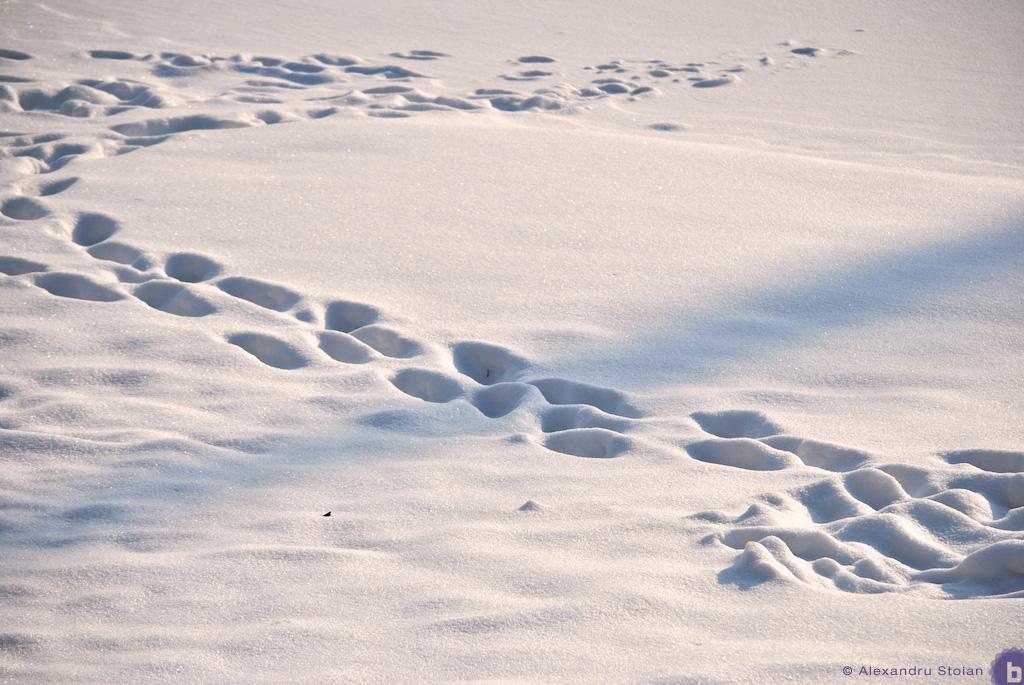 Snow 04 by AlexDeeJay