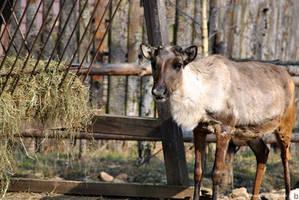Prague Zoo 11