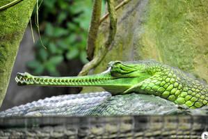 Prague Zoo 02