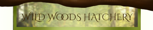 wild_woods_hatchery_signature_by_angeldragonisa-dceuupk.png