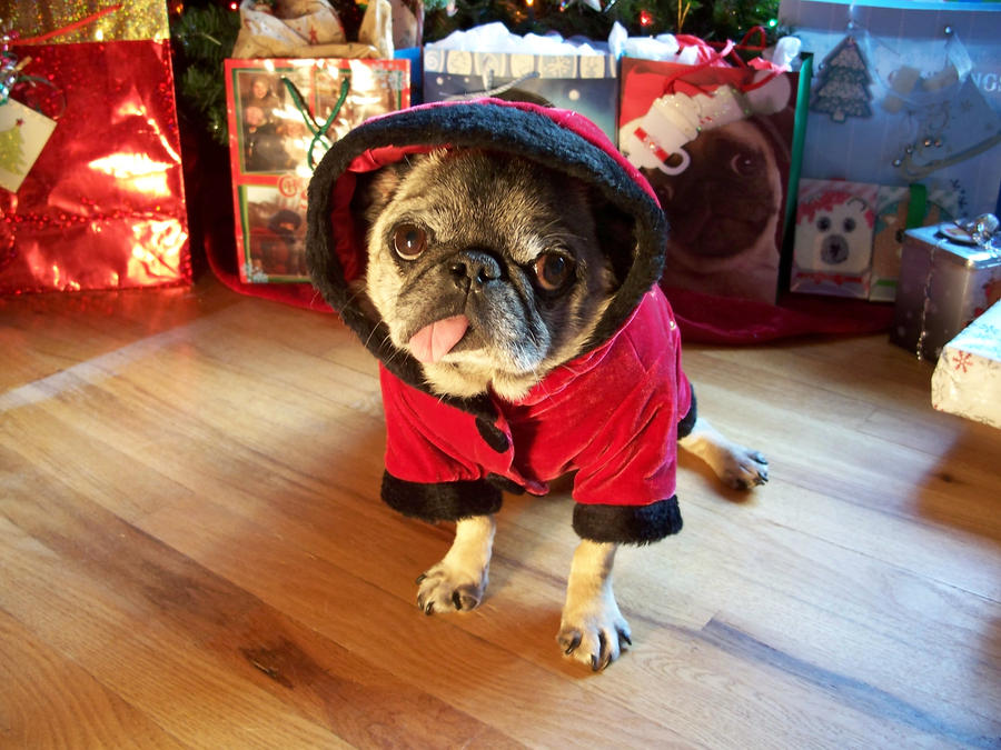Christmas Pug 2012 by check-out