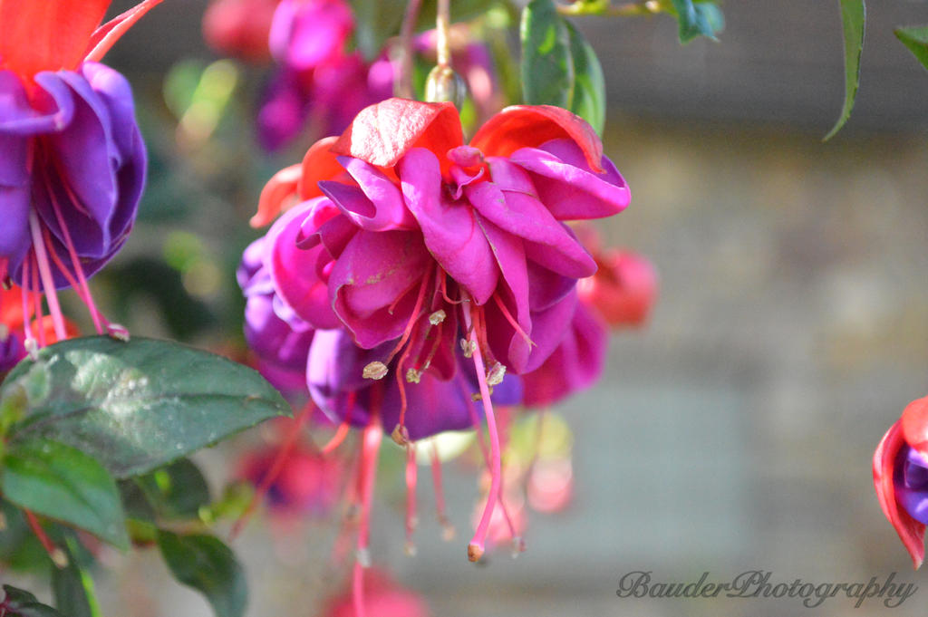 Blooming Pretty by tlbauder1987
