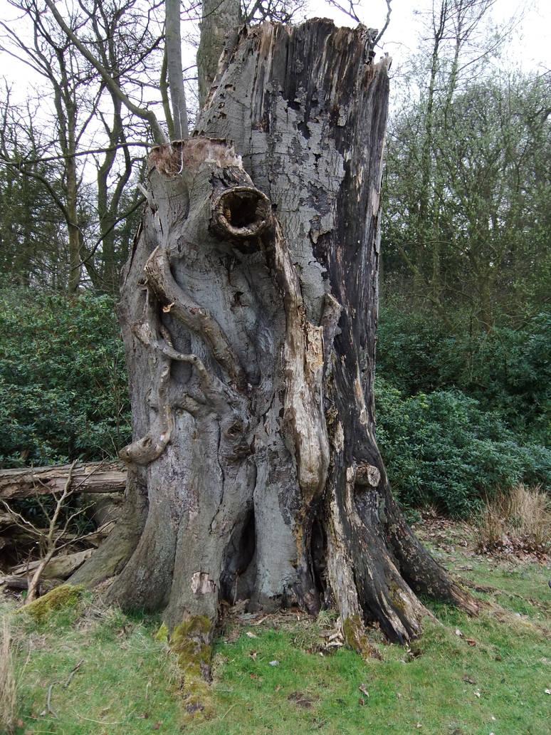 Tree Stump 2 by fuguestock