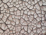 Cracked Mud 08 Texture