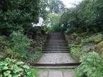 Jungle Steps