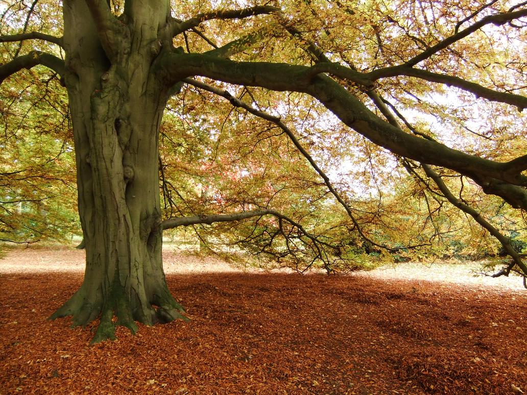 Autmn Tree 02 by fuguestock