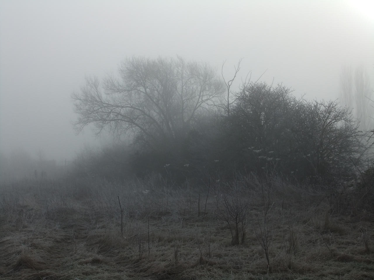In the Mist 07: Hedgerow