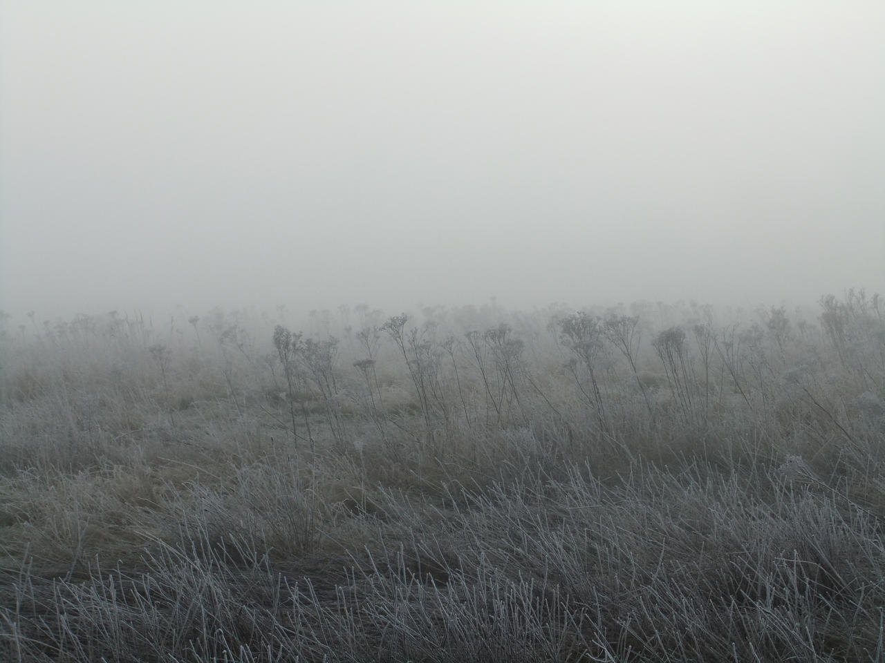 In the Mist 10