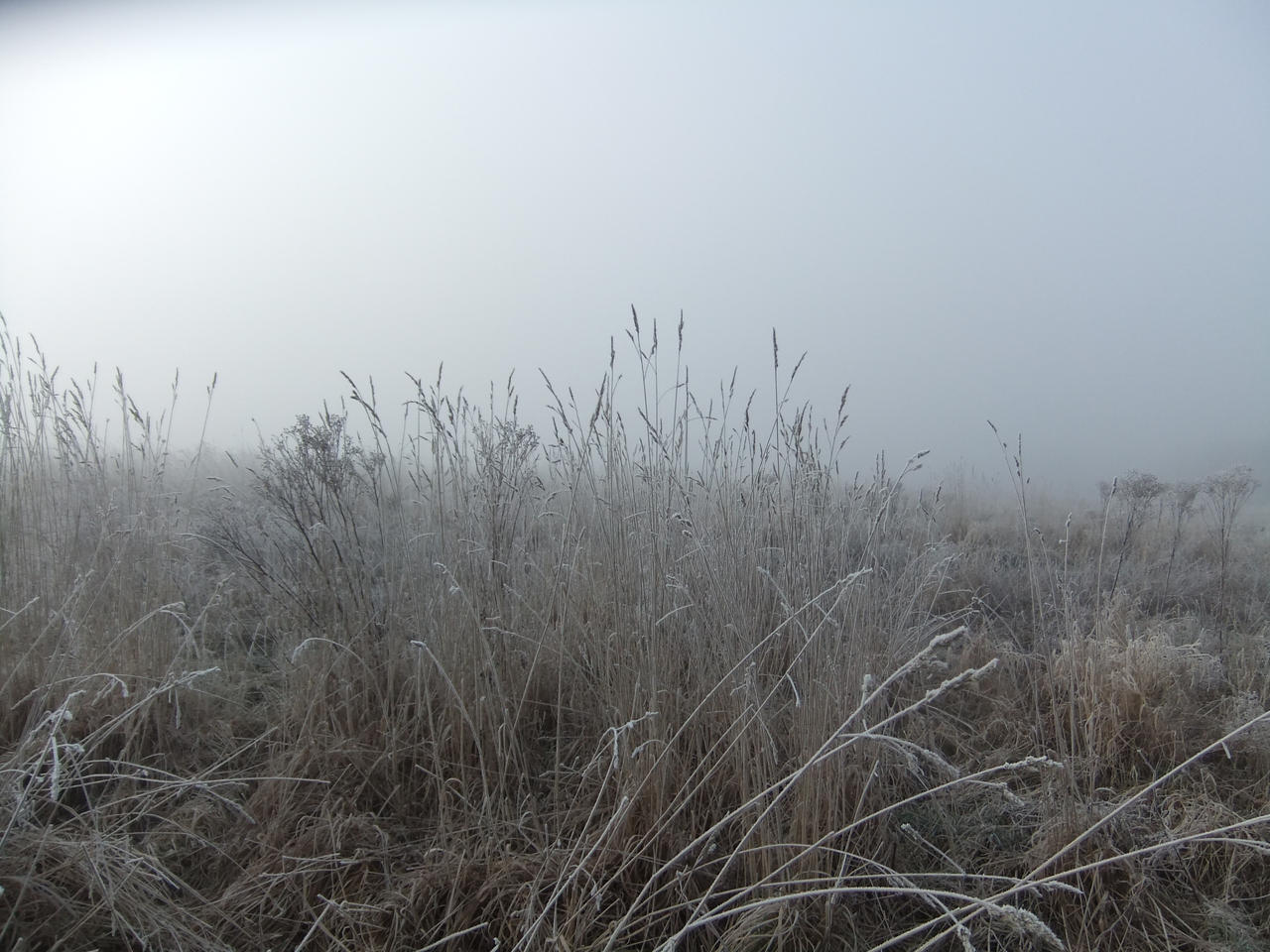 In the Mist 05: Long Grass by fuguestock