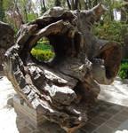 Hollow Log 2