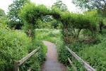 Bridge and Green Arch