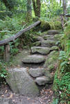 Fairy Forest 13 - Steps