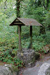 Forest Well 1