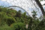 Jungle Scenes 12 - Canopy