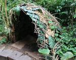 Forest Shelter 2