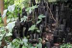 Jungle Idols 2
