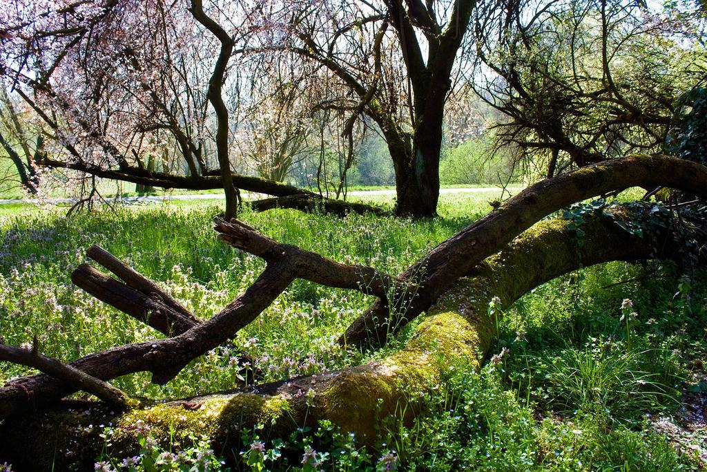 Hidden Spring by SaliroO