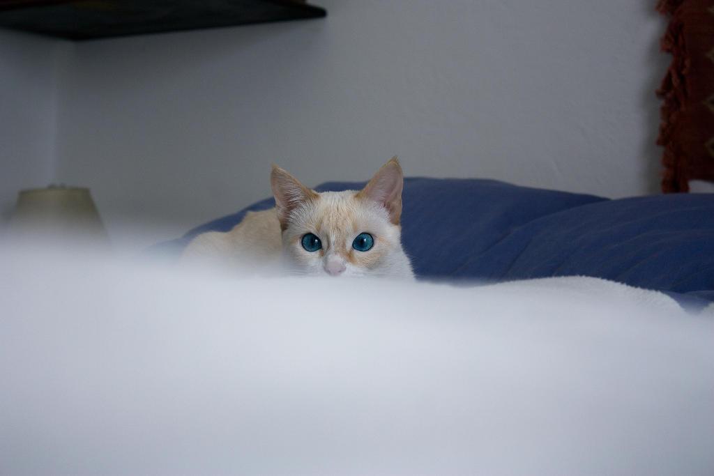 Blue Eyes by SaliroO