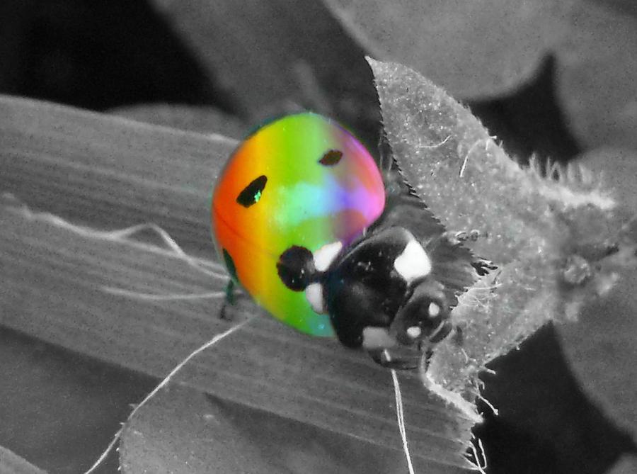 Razbijemo monotoniju bojom - Page 4 Rainbow_Lady_Splash_by_Kieran_Blaine