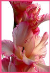 flower next