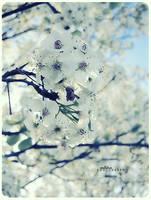 spring. by AutumnYuna