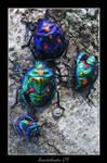 Invertebrates 05