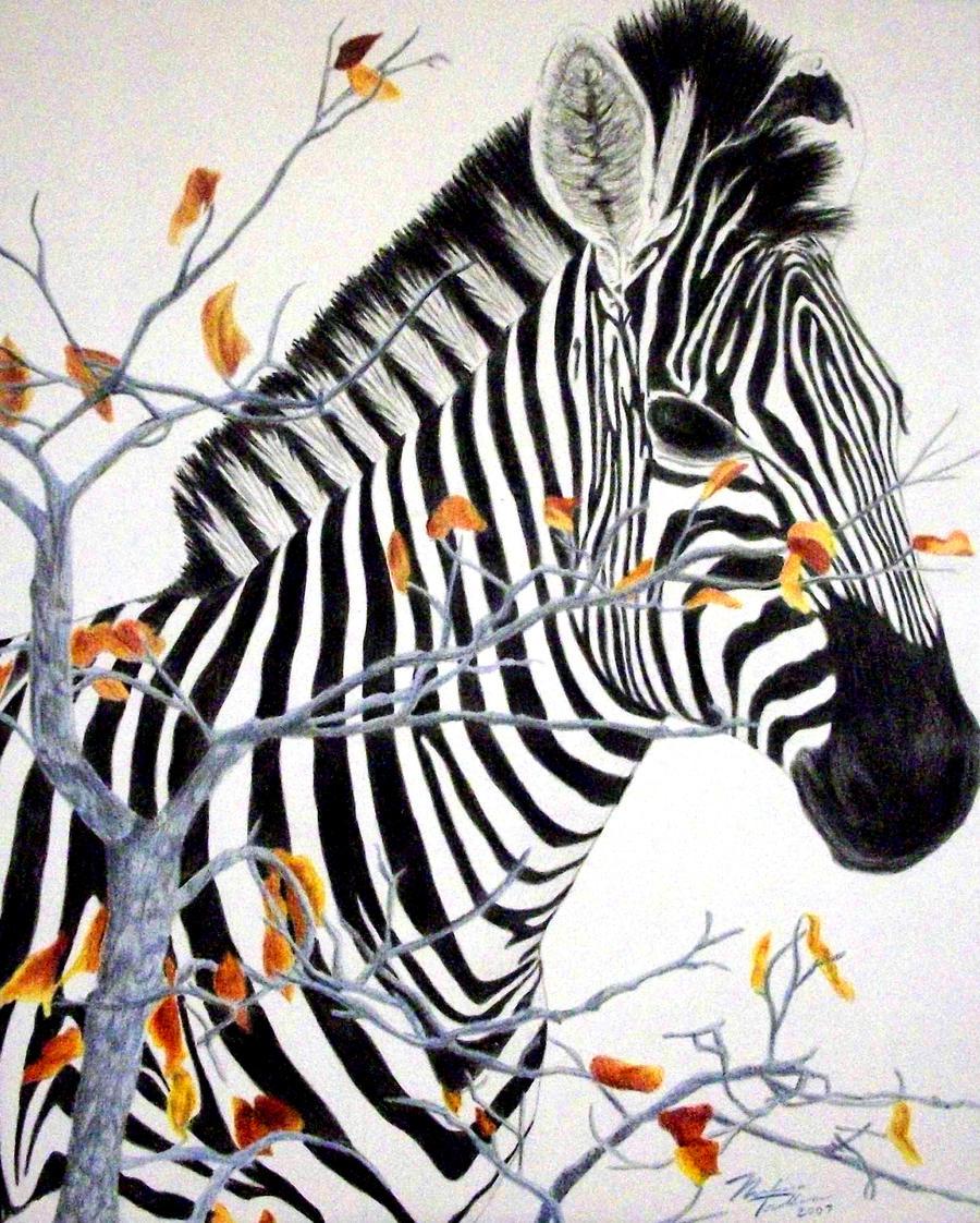 Zebra -colored pencil- by NoKnack on DeviantArt