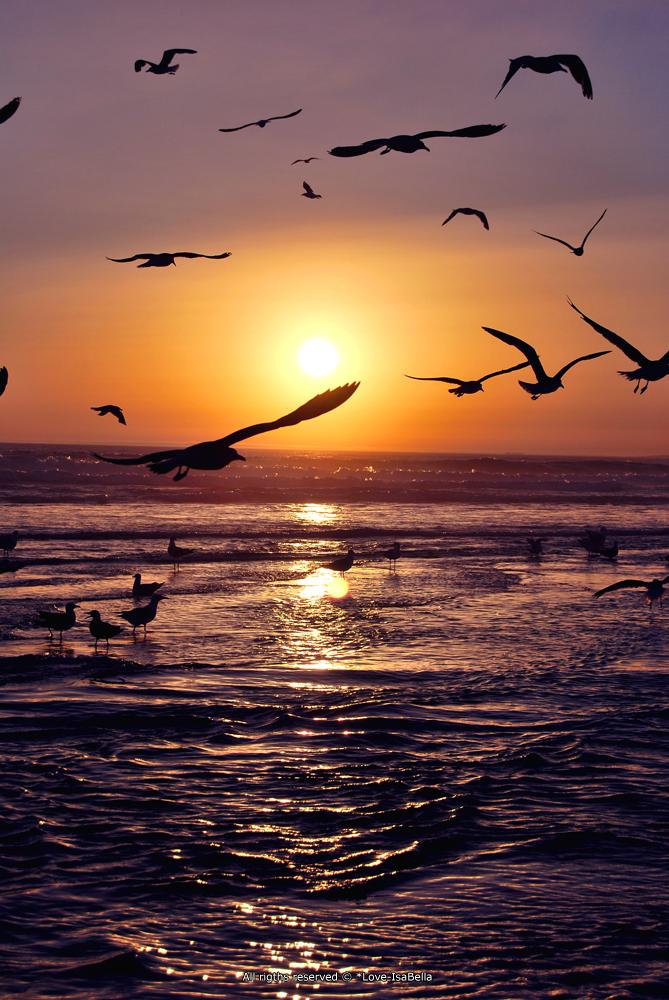 Sunset by AnaIsabelaSantos