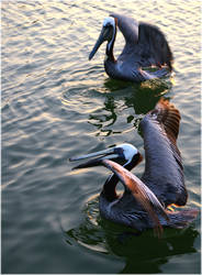 Pelican IV by CapturedCosmicDebris