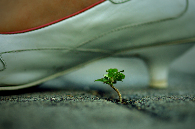 Life Under Our Feet