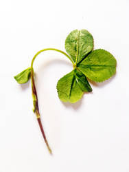 Four Leaf Clover by SwedenLena