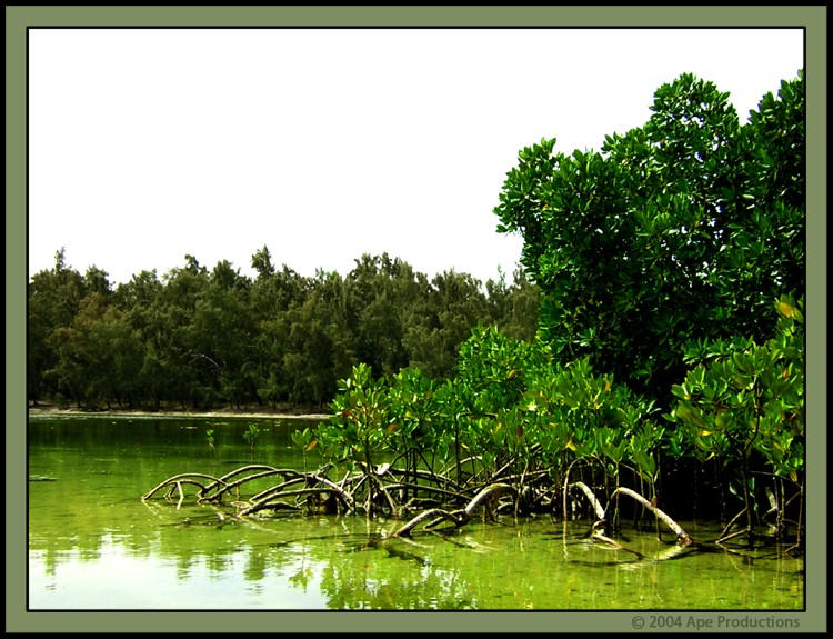 Mangrove by evilape