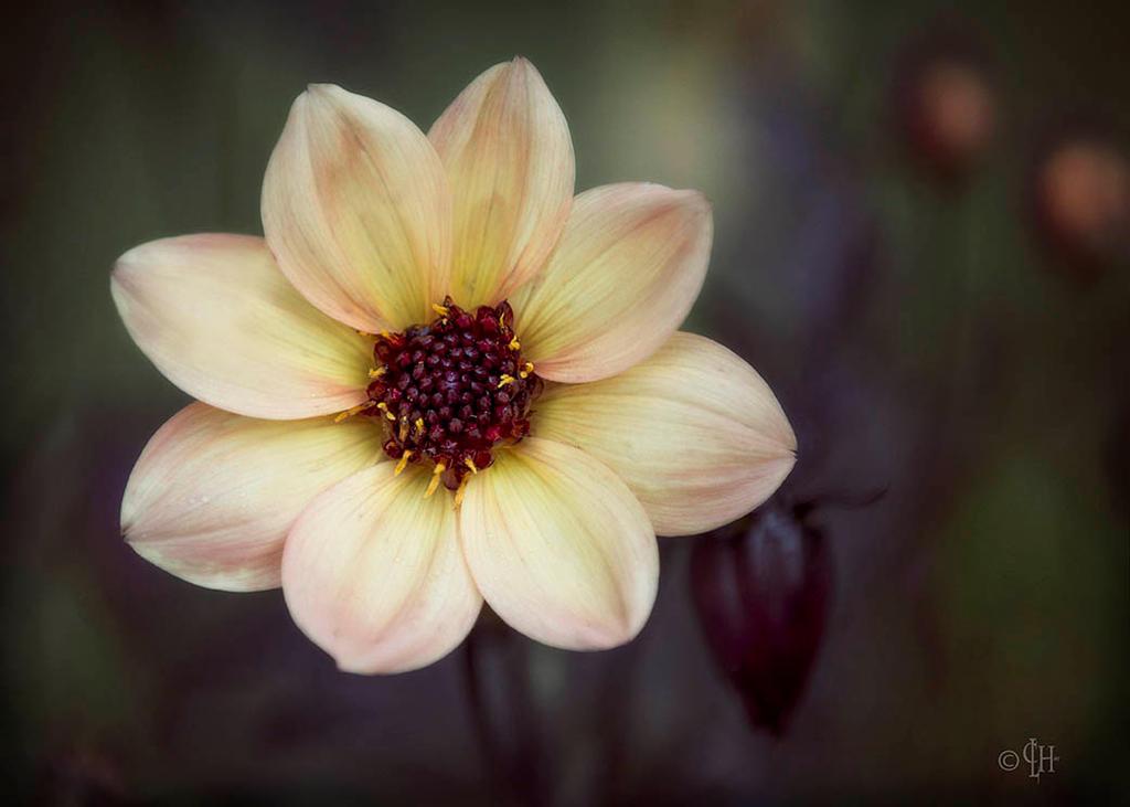 Inniswood Flower by Lyzbil
