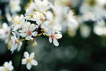 Spring is calling by Elasias