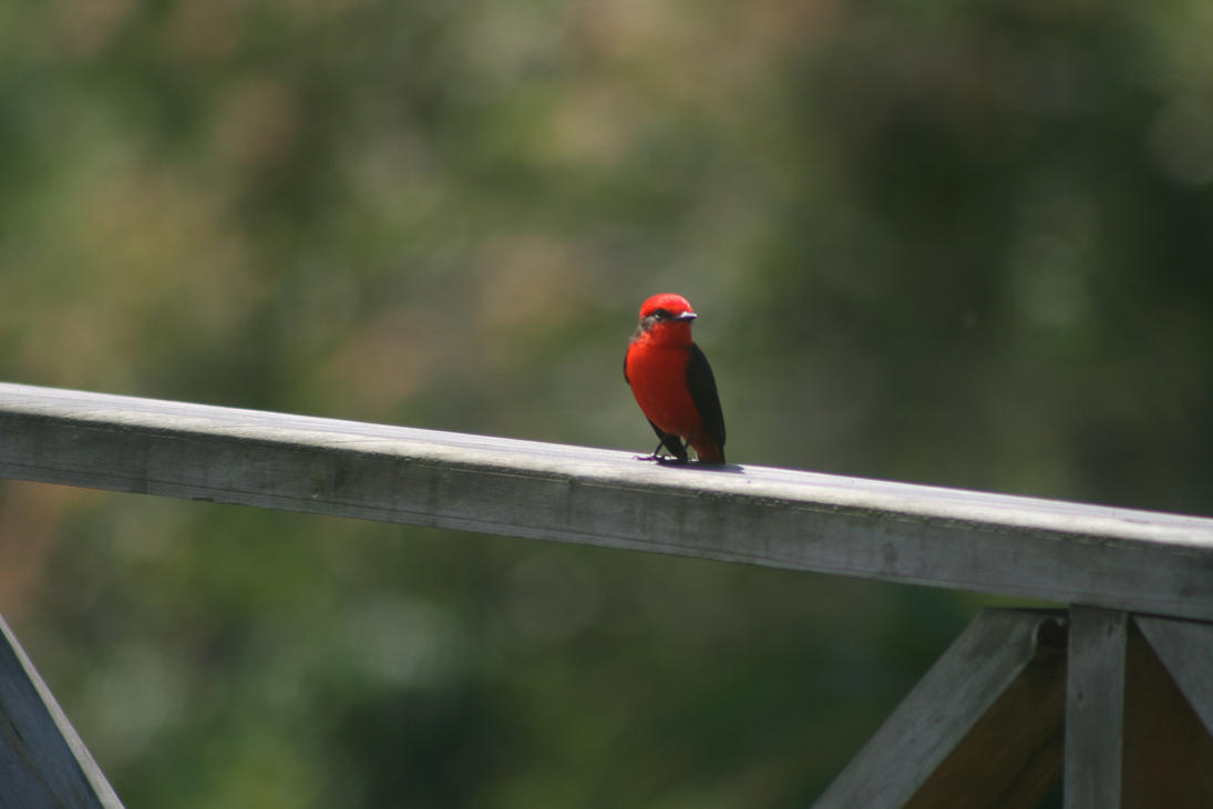 little red bird by Jupabalo98