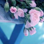Carnation by kaneko-yue