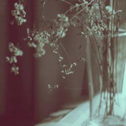 Memories by kaneko-yue