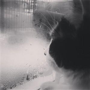KamiraYumeSora's Profile Picture