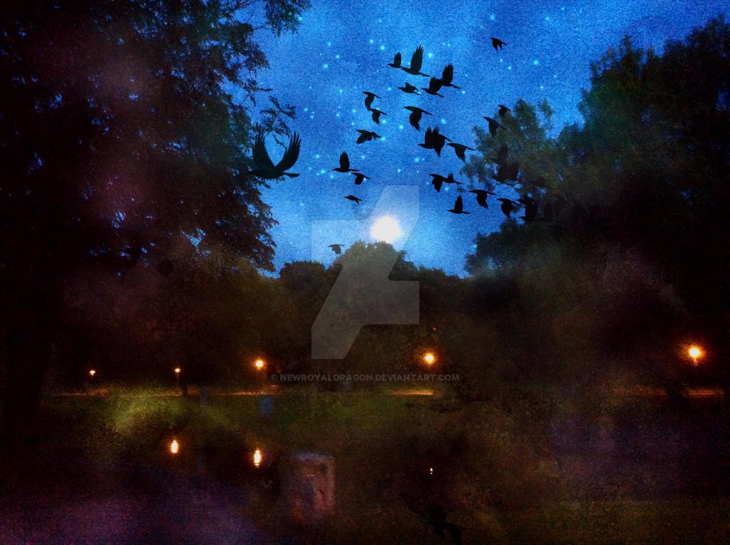 Nachts im Park by NewRoyalDragon