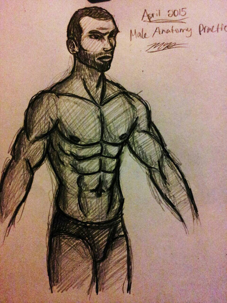 Male Anatomy Practice by Mammal33