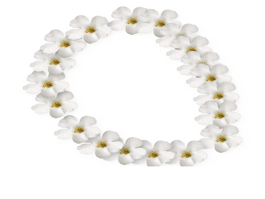 White Flower Frame 2 By Supremechaos918 On Deviantart