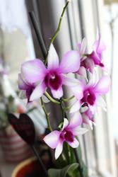 Lovely like yesterday by Jenny2601