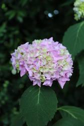 Flower Power by Jenny2601