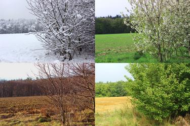 Seasons (2013-2016)